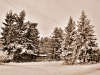 winter_nhgn